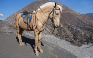 photobombing-horse-near-caldera-mt-bromo